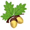 Golden Acorns